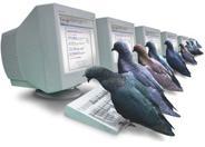 pigeonrank