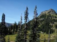 Mt Ranier, meadow